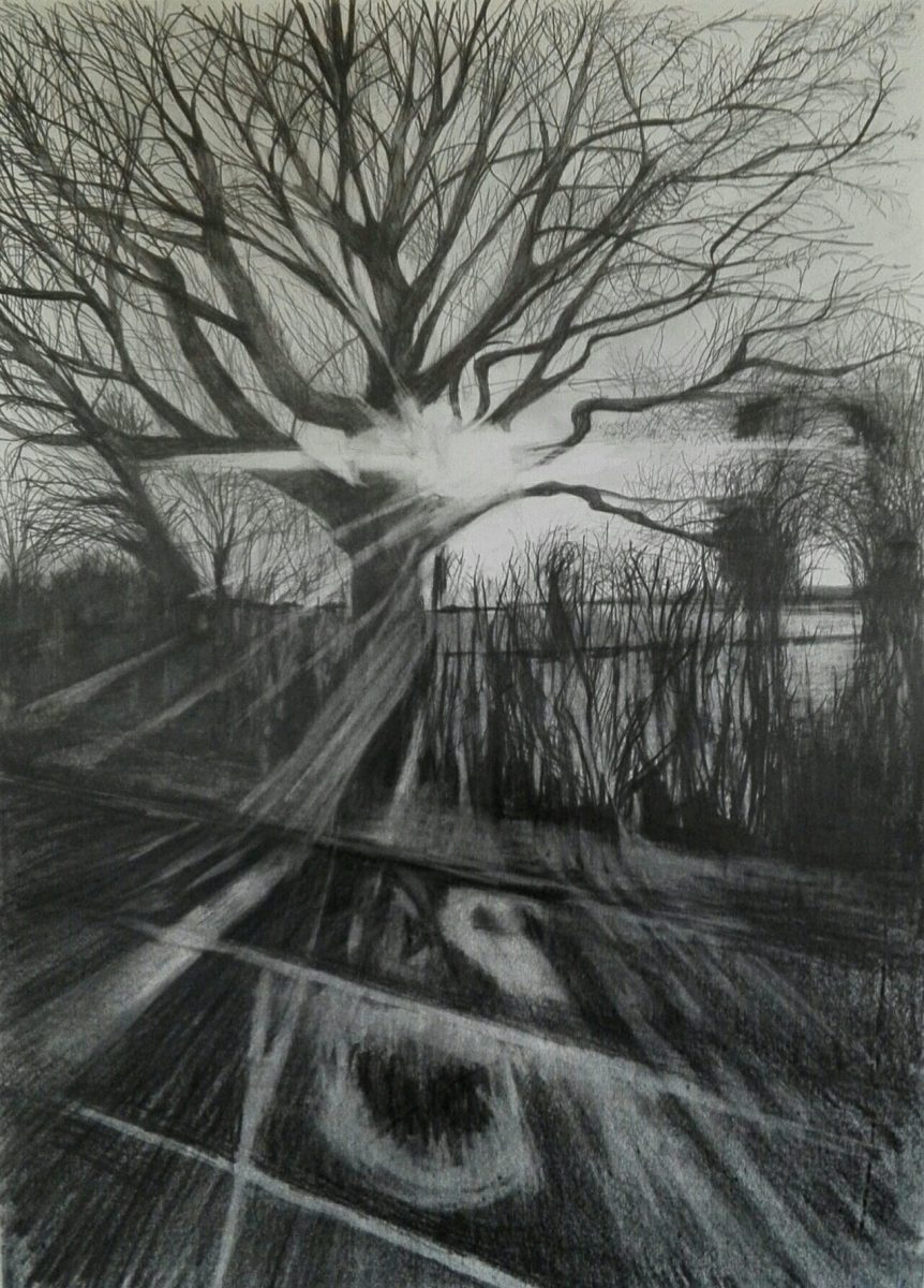 A pencil drawing of a bare winter tree with sunlight coming through it.