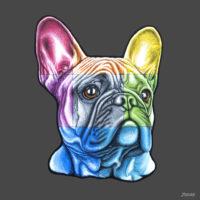 Head portrait of a French Bulldog