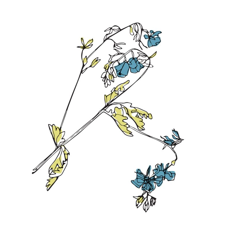 A minimal line drawing of a deadnettle wildflower on a white background, with a small amount of blue and yellow-green colour.