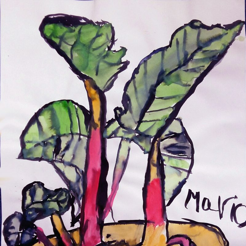 Bold watercolour painting of plant using green for the leaves, red storks and yellow soil and pot with black pen outline