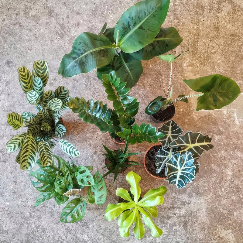 Birdseye view of a group of potted green leafy houseplants on a marble surface