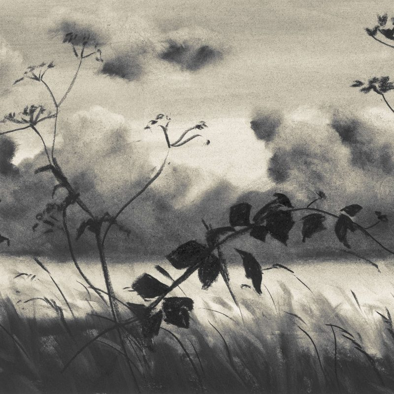 Charcoal drawing with cow parsley and clouds