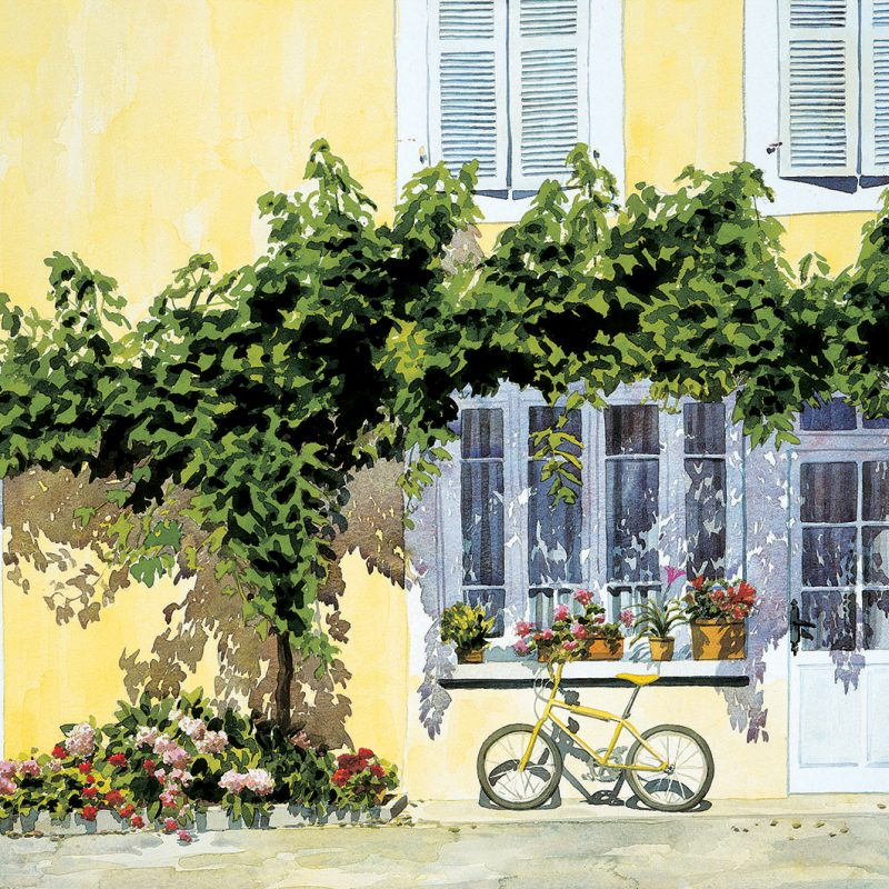 Yellow Bicycle and Vine Canopy