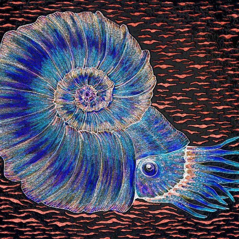 Enhanced drawing of ammonite