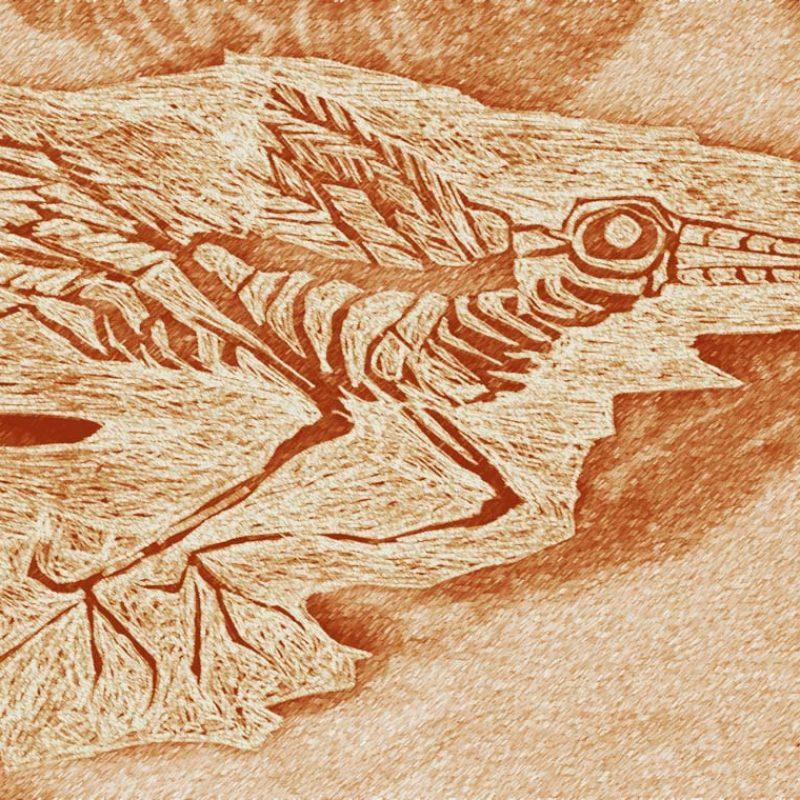 Enhanced drawing of bird fossil
