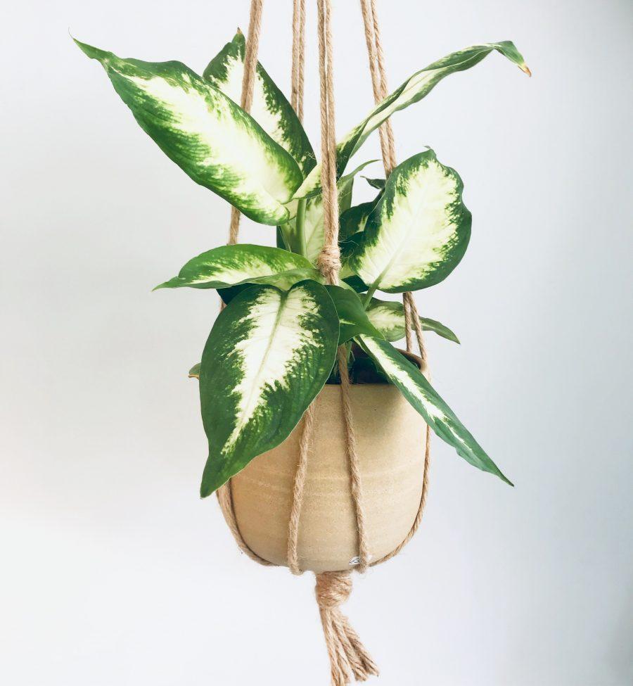 A ceramic hanging plant pot