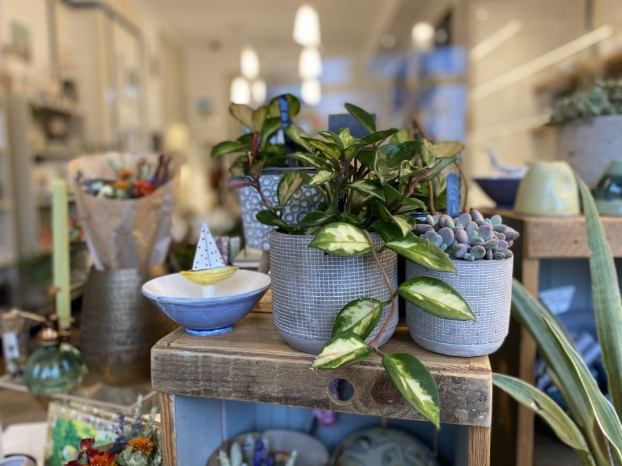 Photograph looking through the window of T&G and seeing plants, ceramics, chocolate and other lovely gifts