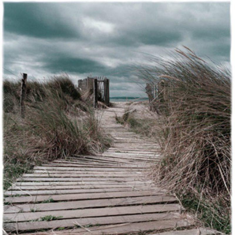 a wooden weather beaten pathway on sand dunes