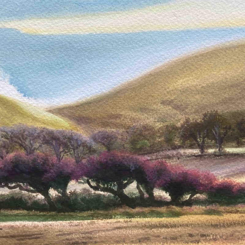 Watercolour of hawthorns at Firle
