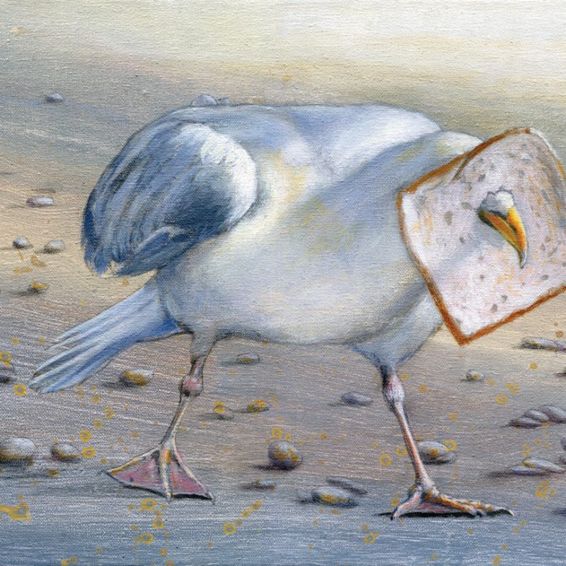 Seagull blinded by piece of bread