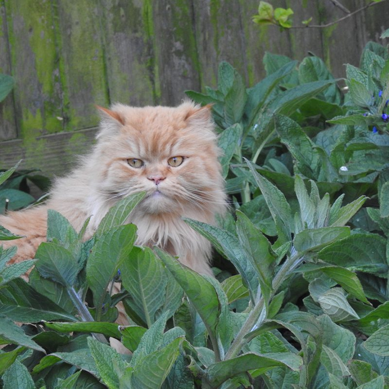 A ginger cat sits in some high green plants.