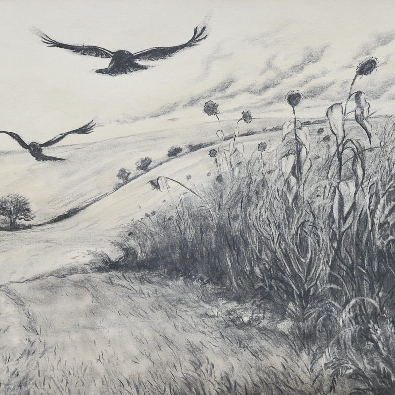 Charcoal of crows and sunflowers at Mile Oak