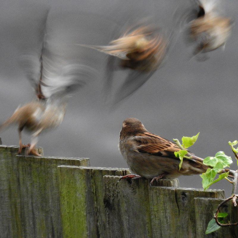 A photograph of birds in flight