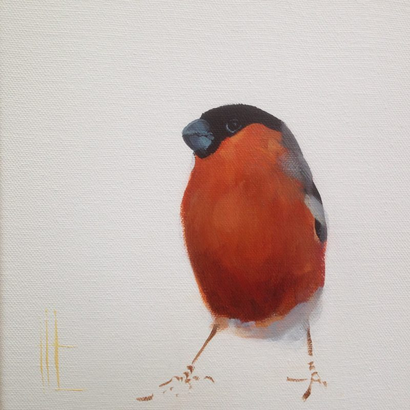 Standing Bullfinch on a white background.
